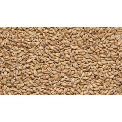 Солод пшеничный Wheat Blanc, Castle Malting, 1кг